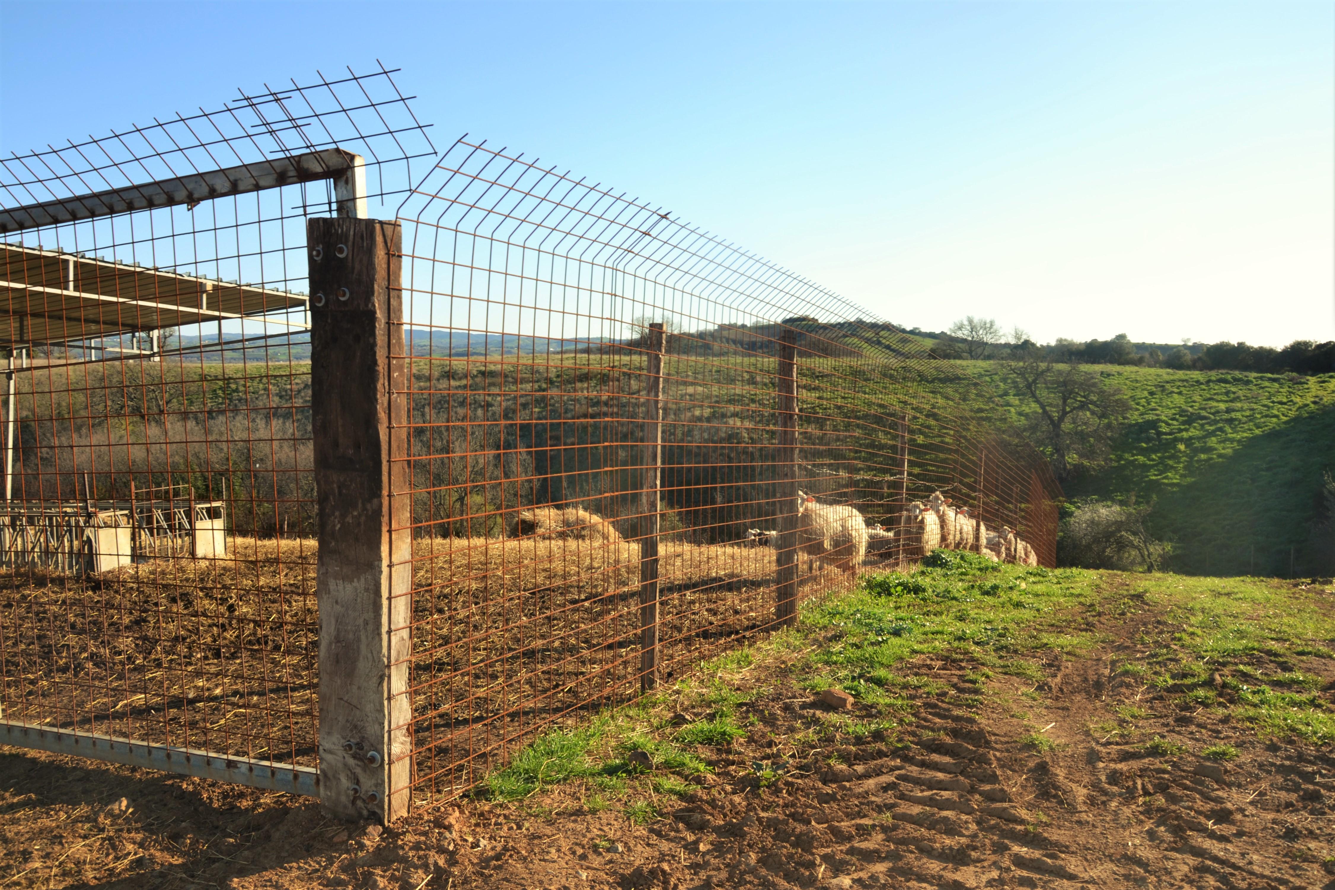 Recinzioni metalliche fisse protezione del bestiame for Recinto cani fai da te