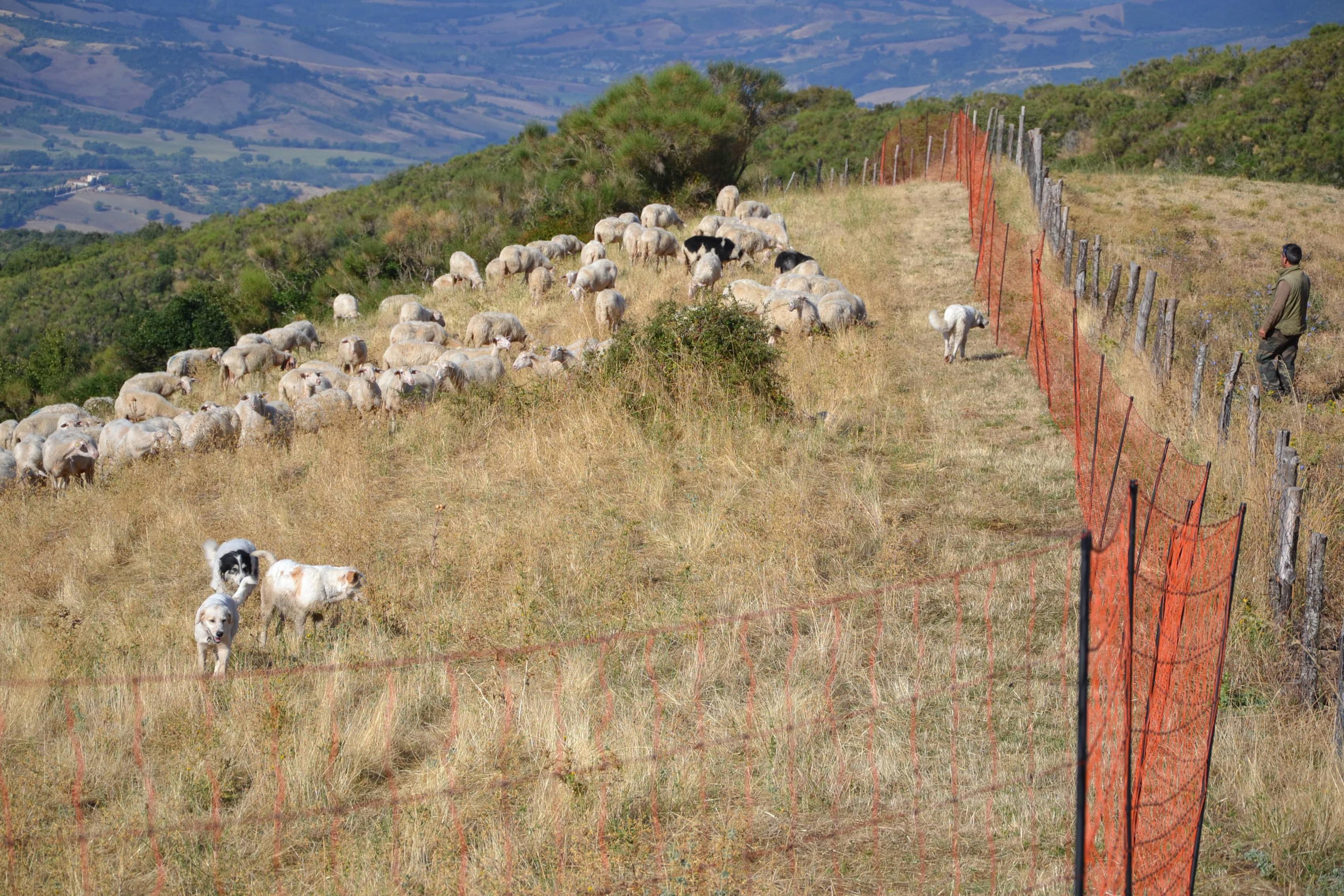 Recinzioni elettrificate mobili protezione del bestiame for Recinzione elettrica per cavalli