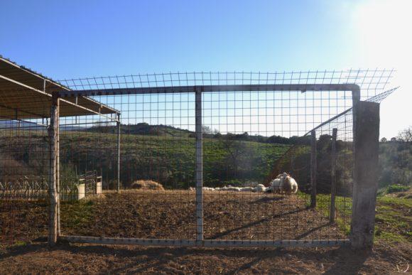 Rete Elettrosaldata 10x10 Filo 5.Recinzioni Metalliche Fisse Protezione Del Bestiame